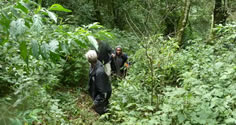 hiking in Bwindi searching for gorillas