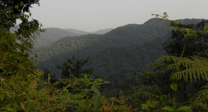 Bwindi Misty Jungles - Home to Uganda Gorillas