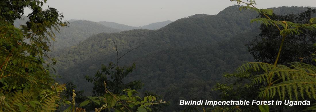 bwindi-forest-uganda-1