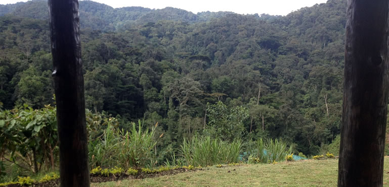 View of Bwindi National Park - UNESCO World Heritage Site