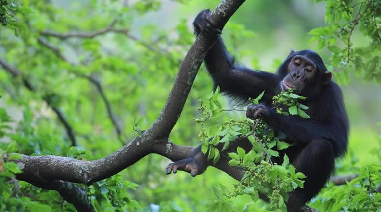 Gorilla Watching Bwindi