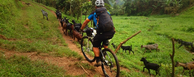 Essentials For A Memorable Mountain Biking Ride Within Uganda